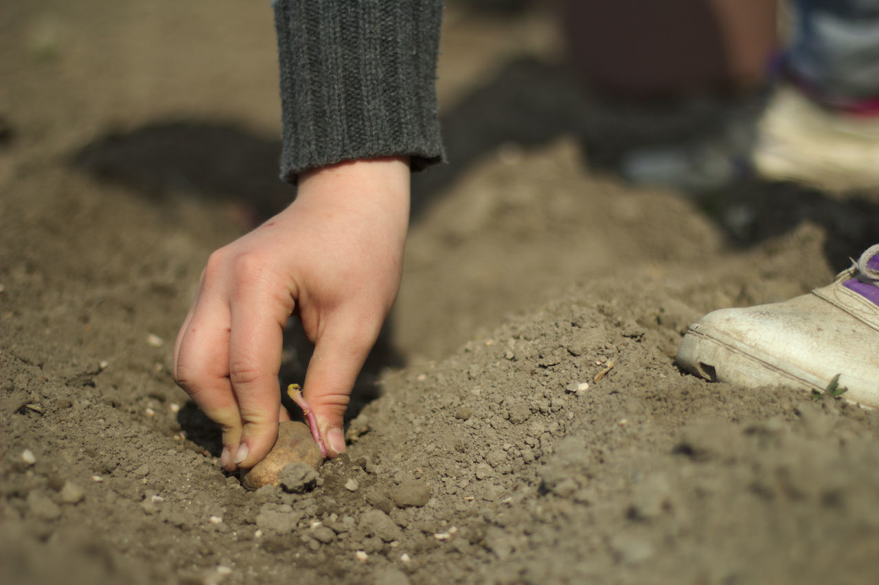 childhood, selective focus, real people, one person, sand, day, lifestyles, outdoors, human body part, close-up, low section, human hand