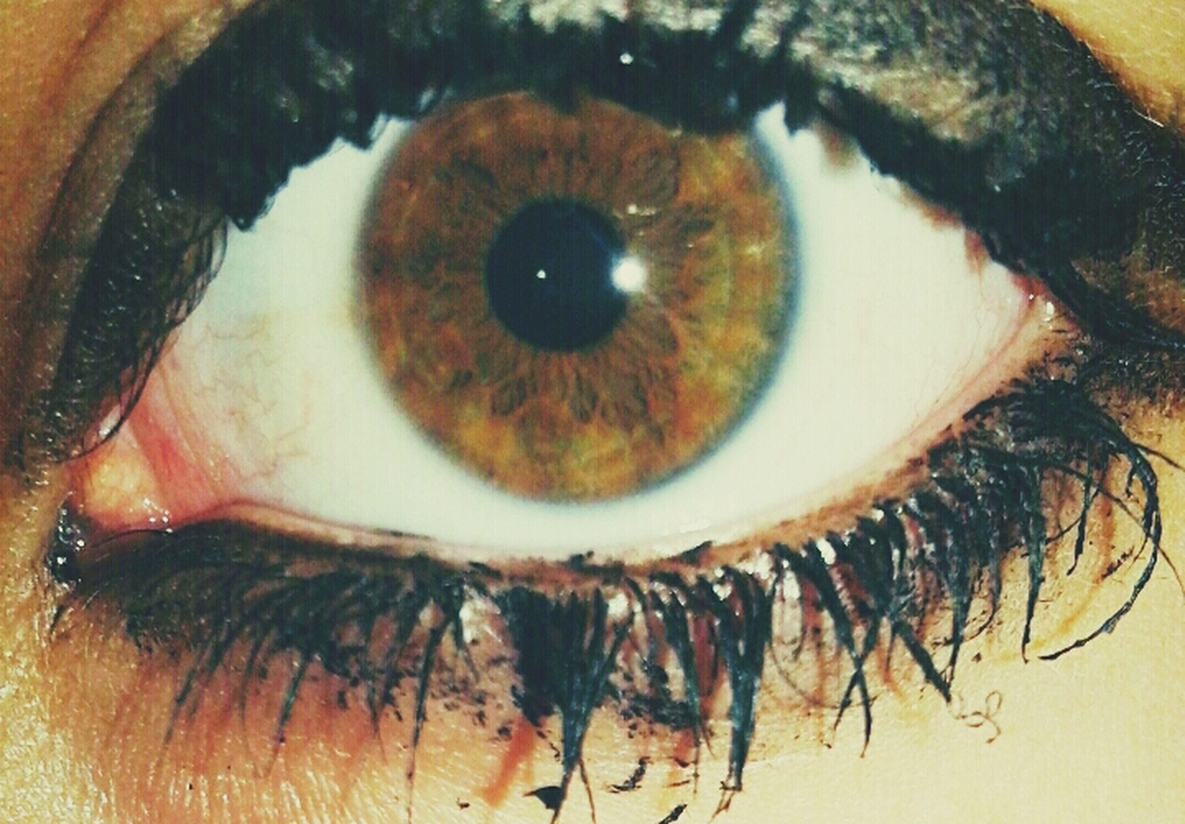 indoors, human eye, close-up, eyesight, looking at camera, eyelash, portrait, part of, lifestyles, extreme close-up, sensory perception, front view, human face, person, headshot, human skin, leisure activity