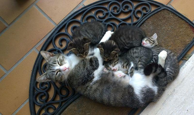 Cats Family Feline Love Mom Pets Relaxation Sleeping Cat
