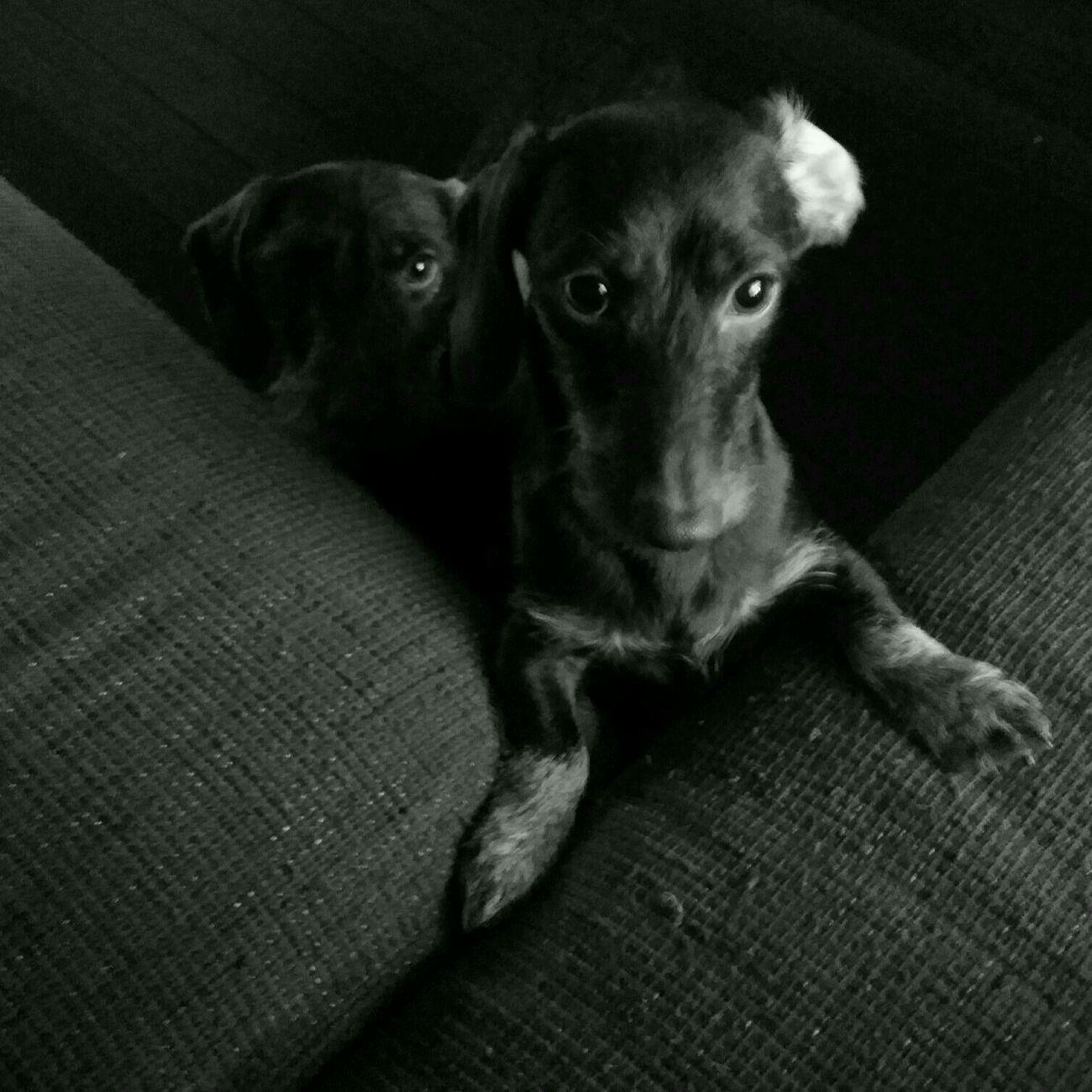 Black & White Dog Live