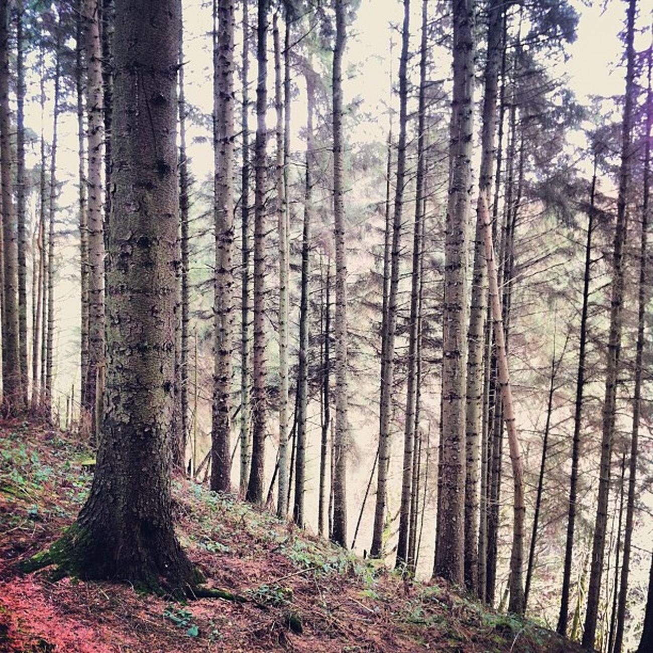 Sutton Bank woodland #suttonbank #northyorkshire #beautifulbritain #instagood #instagram #iphoneography IPhoneography Instagram Instagood Instagramhub Suttonbank Northyorkshire Beautifulbritain