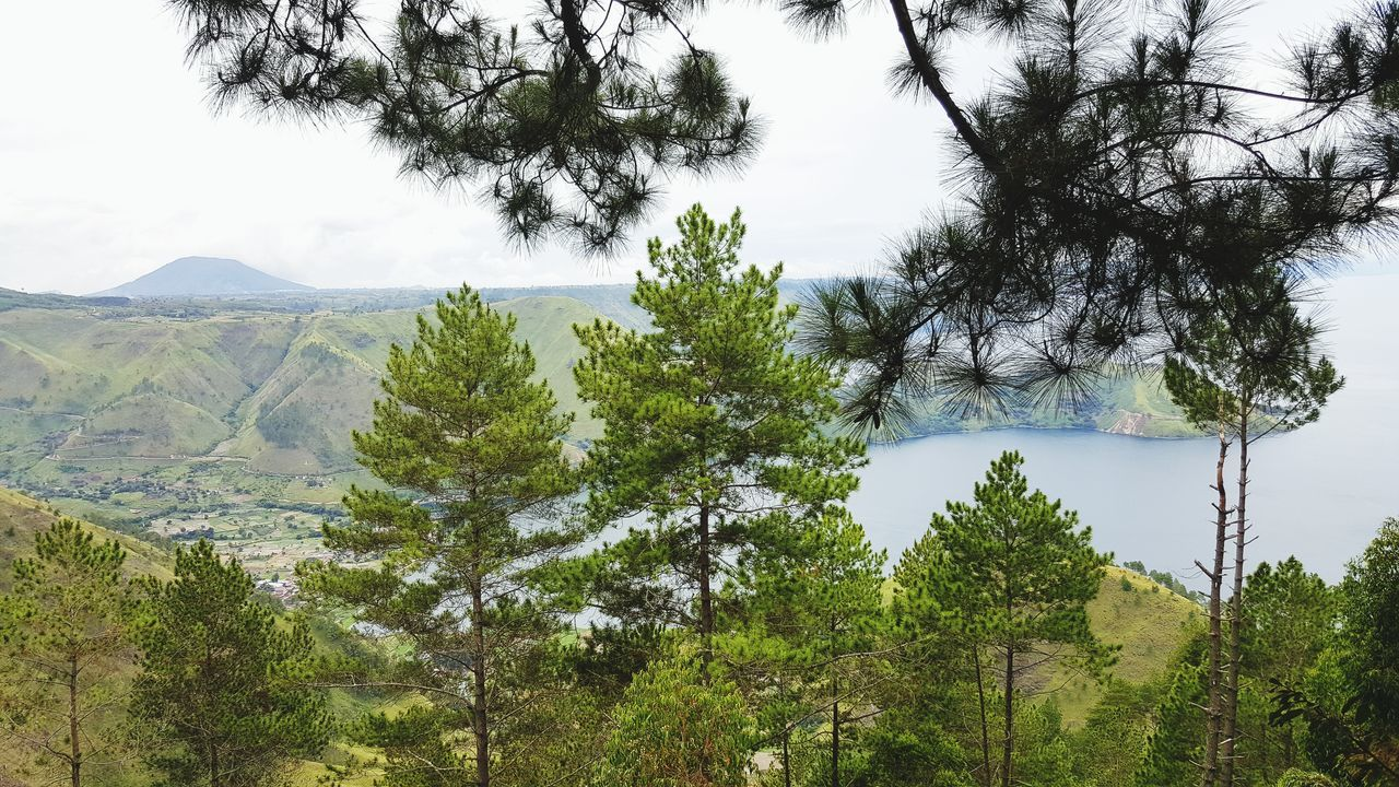 Toba Lake Breakfast View Tree Sky Growth Pine Tree Danautoba TOBALAKE Indonesiatourism INDONESIA Indonesia_photography Tourism Destination Halal Nature No People Forest Landscape Day Outdoors Beauty In Nature