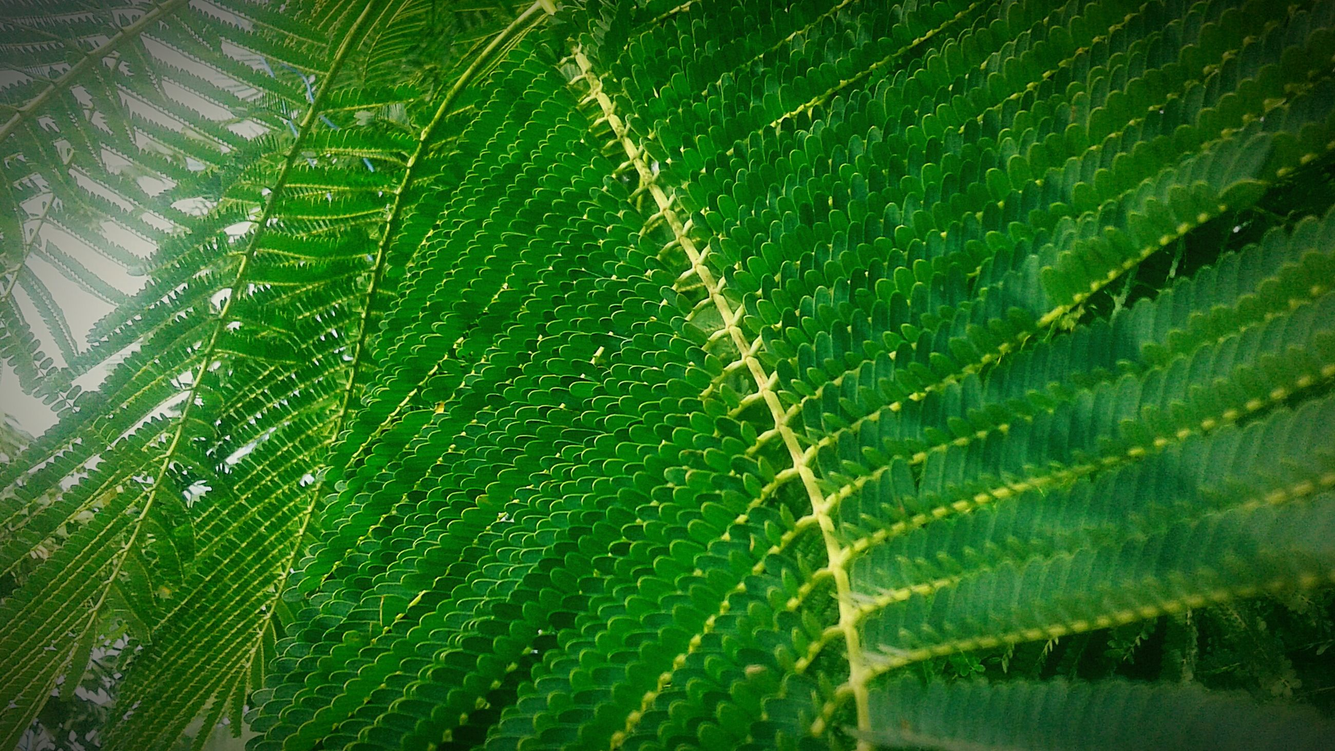 leaf, green color, nature, growth, close-up, day, no people, plant, freshness, beauty in nature, backgrounds, fragility, outdoors