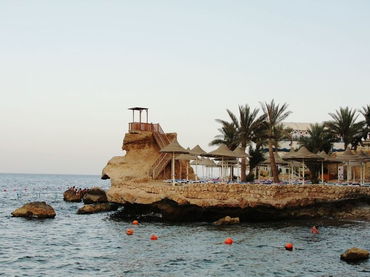 2014 Egypt Sharm El-Sheikh Red Sea Sea Beatch Trees Palms