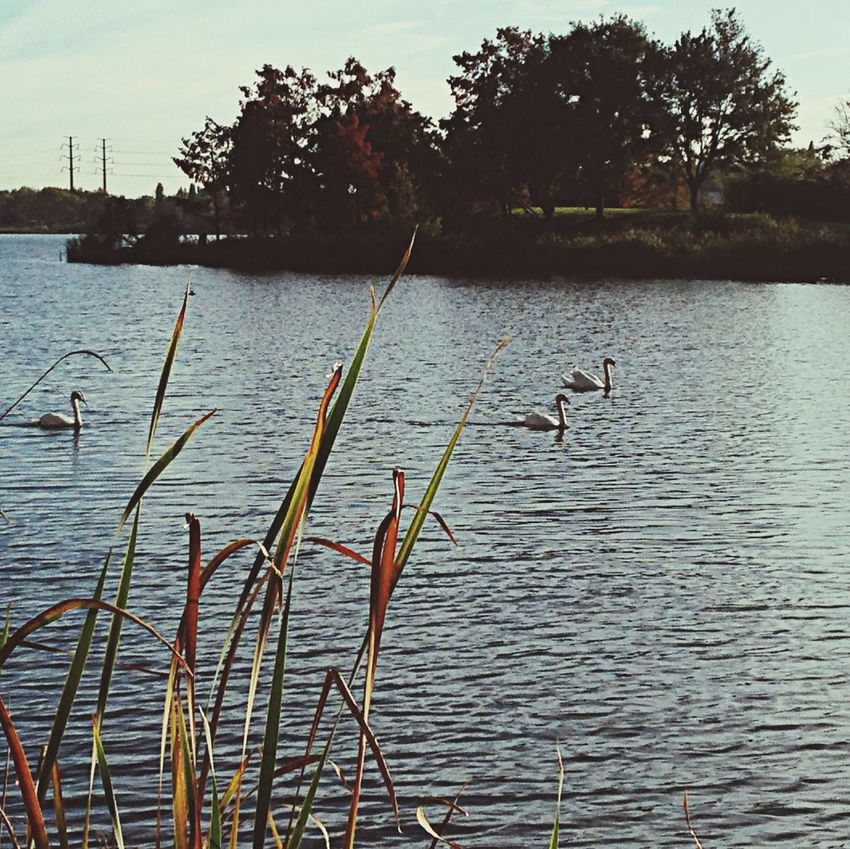 Un Lac Unejourneed'automne