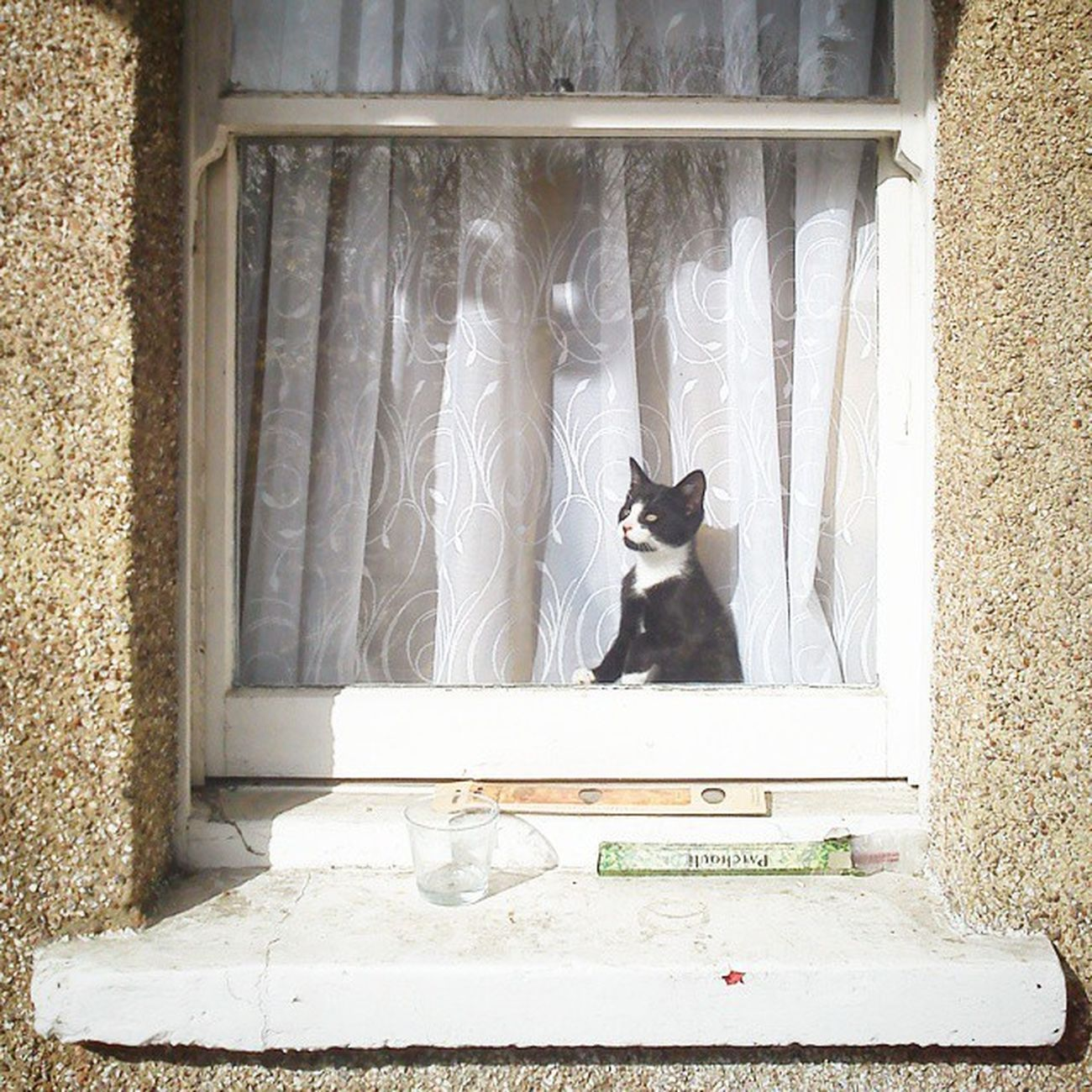 Cat Kitten Tuxedocat Windowsill Whereareyou Onthelookout Areyouhomeyet