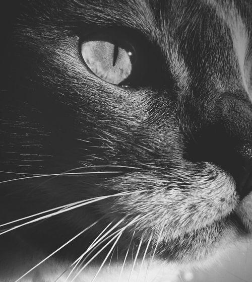 Eye Miaou Cat