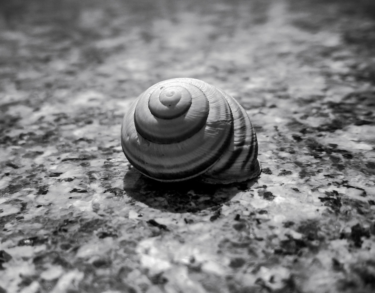 snail, animal themes, one animal, gastropod, animals in the wild, nature, wildlife, close-up, no people, selective focus, day, outdoors, fragility