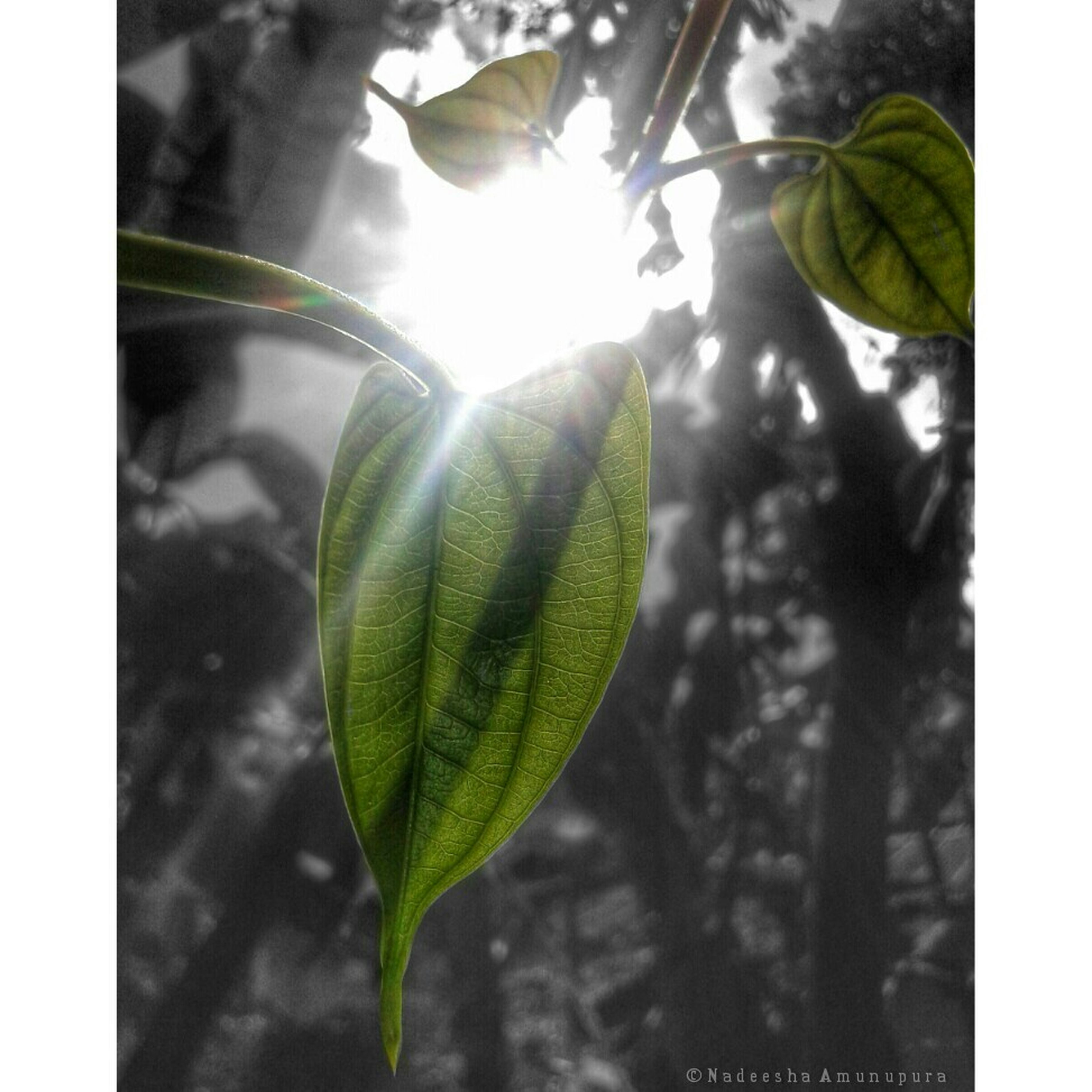 leaf, growth, close-up, green color, transfer print, nature, plant, auto post production filter, focus on foreground, sunlight, beauty in nature, day, outdoors, no people, sun, stem, freshness, selective focus, fragility, green