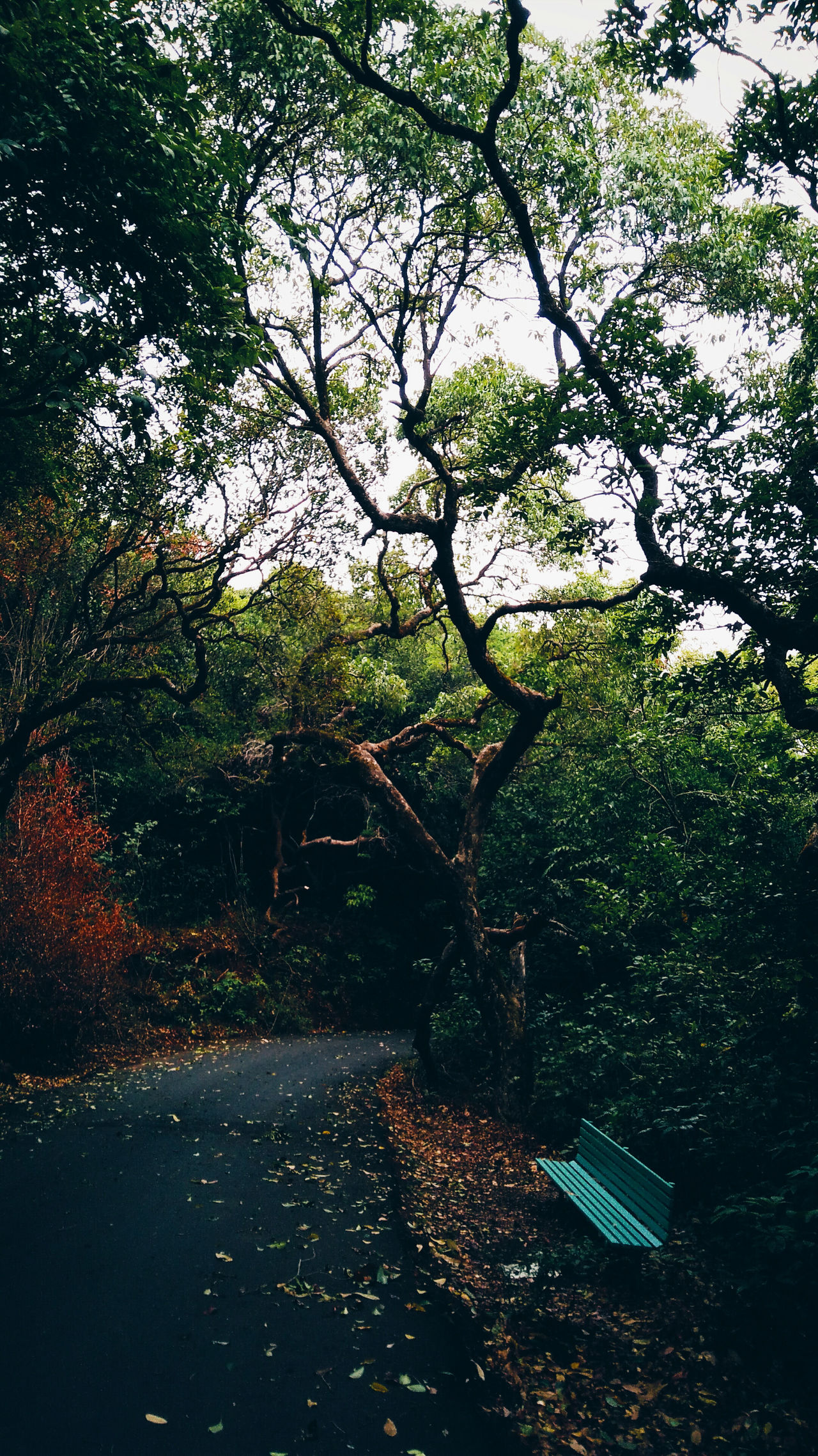 A person often meets his destiny on the road he avoids to take it. Trees Forest Bench Outdoors Autumn Road The Great Outdoors – 2016 EyeEm Awards Nature's Diversities