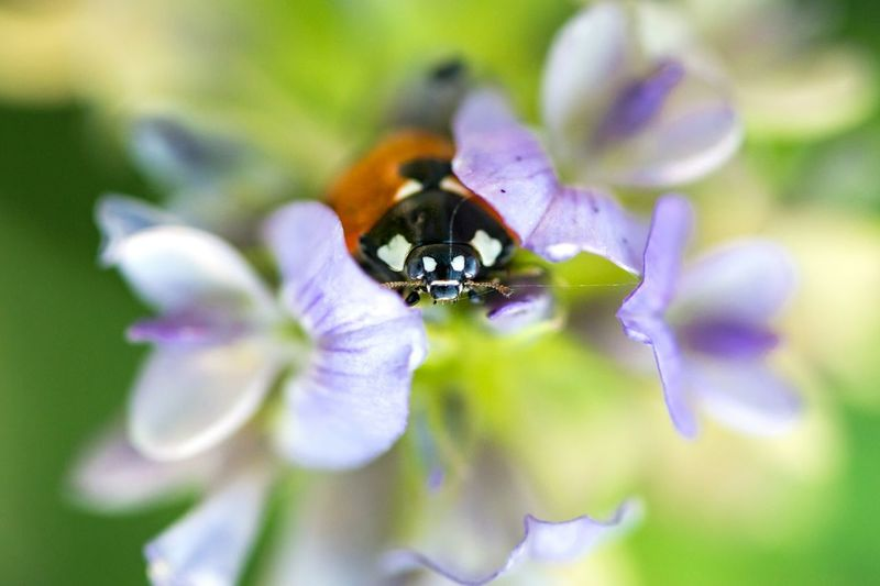 Little ladybug i found at the old landfill in Berlin. Paminimeeting2 Macro Macro Photography Ladybug Insect Insects  Photography SIGMA MACRO 105mm F2.8 EX DG OS HSM Sigma Nikon D7200 Nikonphotography Closeup Colorful Nature Flowers Shallow Depth Of Field