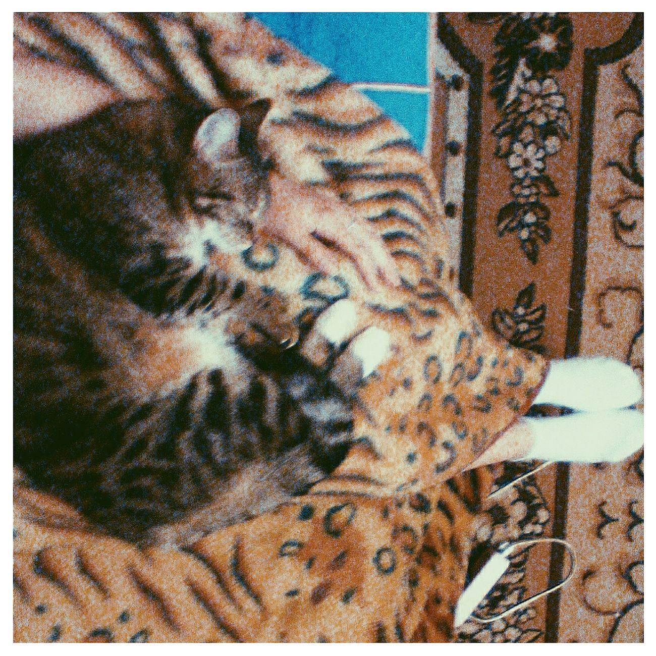 Relaxing Taking Photos Cat Catsofinstagram Evening 😻😻😻