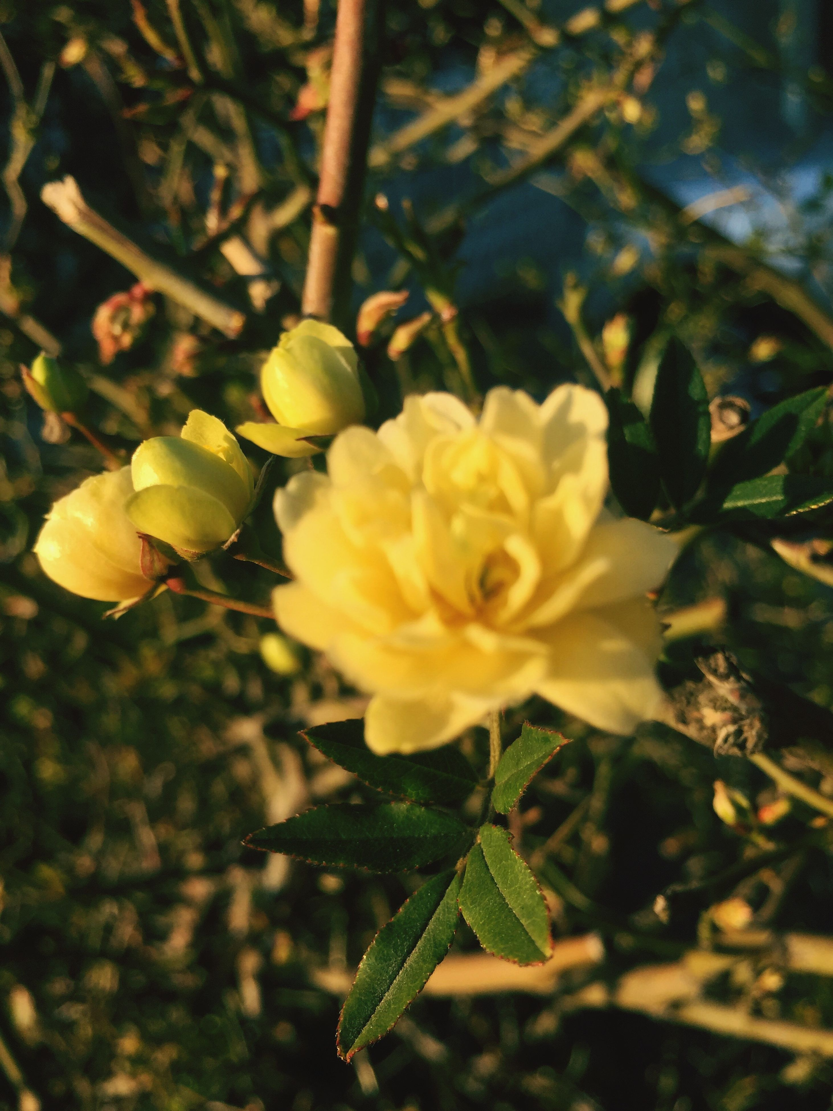 growth, nature, beauty in nature, freshness, close-up, flower, focus on foreground, tree, yellow, plant, no people, fragility, outdoors, day, flower head