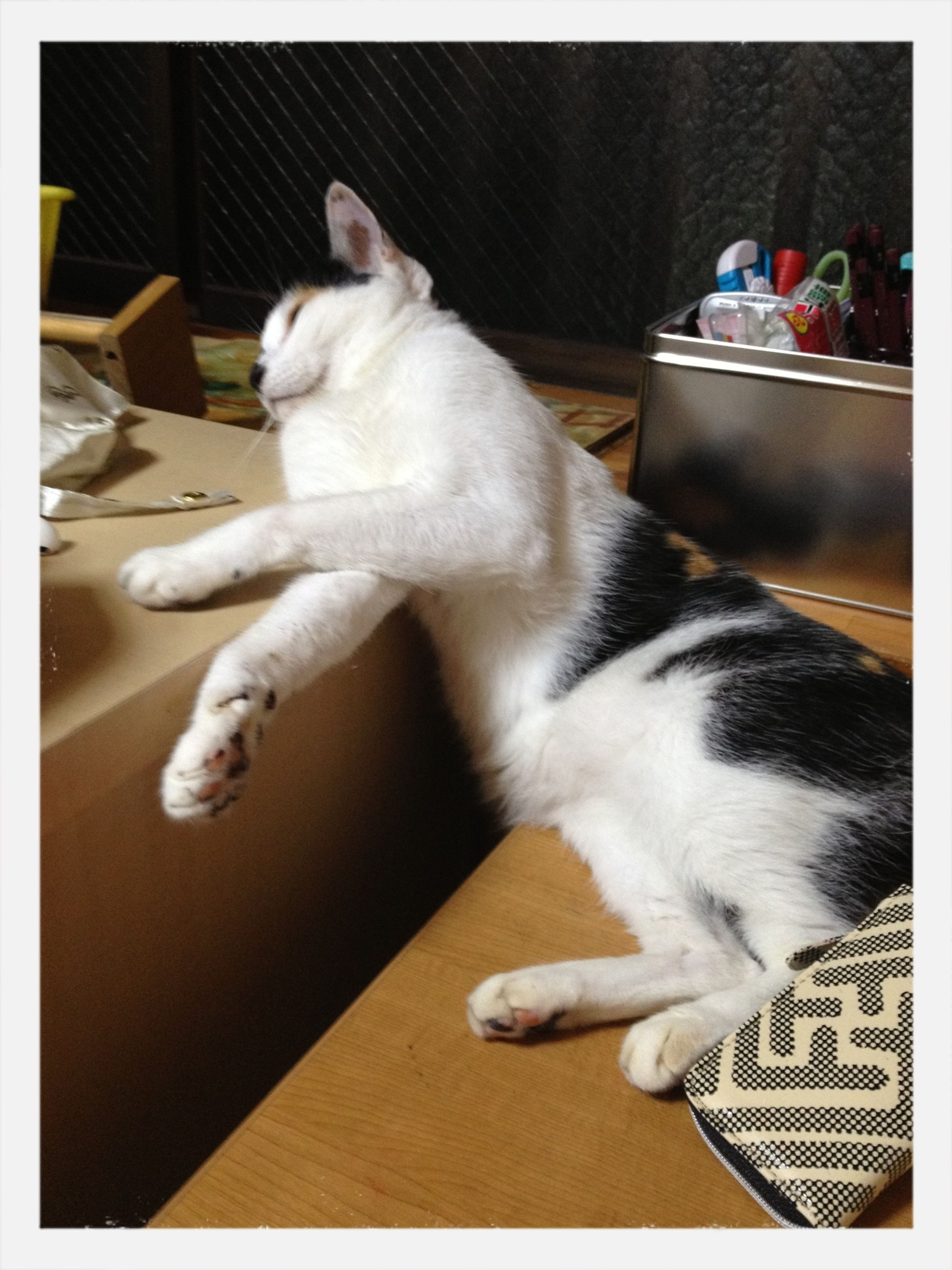 transfer print, animal themes, pets, domestic animals, indoors, one animal, auto post production filter, mammal, domestic cat, cat, relaxation, home interior, feline, resting, white color, sleeping, high angle view, full length, lying down, sitting