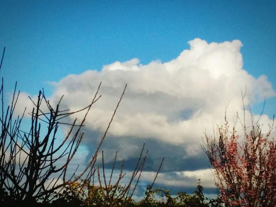 Cielo Cielo Y Nubes  Cielo Azul Ciel Ciel Et Nuages Ciel Bleu Nubes Nubes #clouds Nubes Clouds Nubesdealgodon Sky Skyporn Sky And Clouds Skyscape Skylove Skylovers_clouds Arboles Arboles , Naturaleza Nature_collection árbol Nature Photography Naturephotography Nature