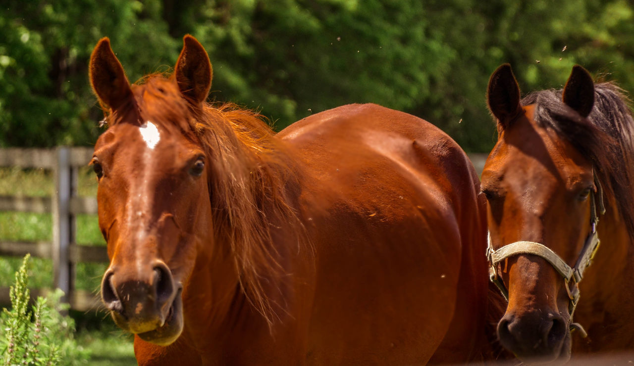 Animal Themes Brown Close-up Day Domestic Animals Herbivorous Horizon Over Water Horse Livestock Mammal Nature No People One Animal Outdoors Paddock Portrait Standing Two Horses Sommergefühle