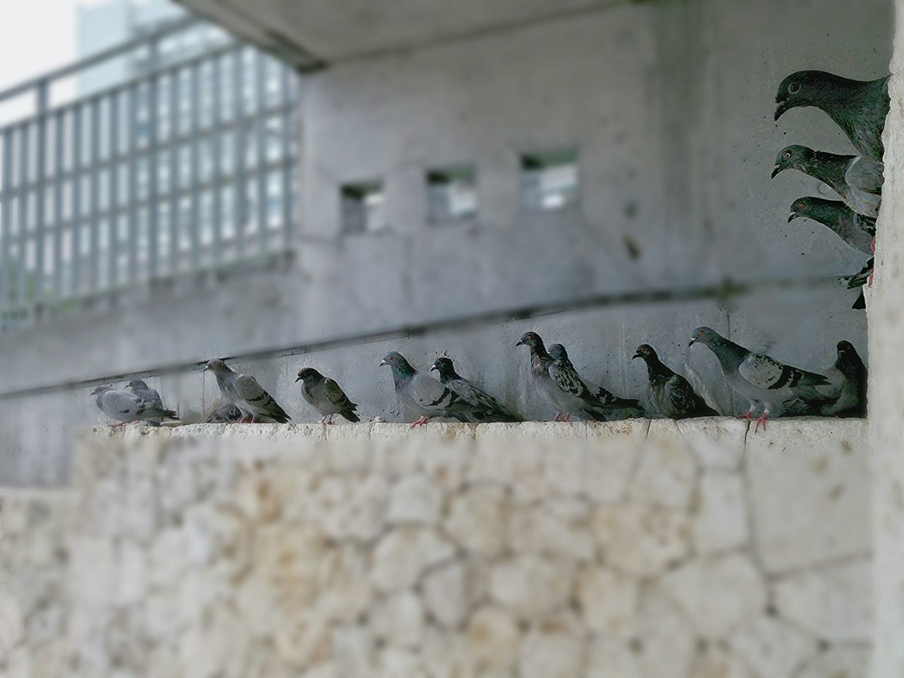 台風で鳩も避難中(^_^;) Sony Xperia Aviary Hello World Taking Photos Birds🐦⛅ Bird Photography