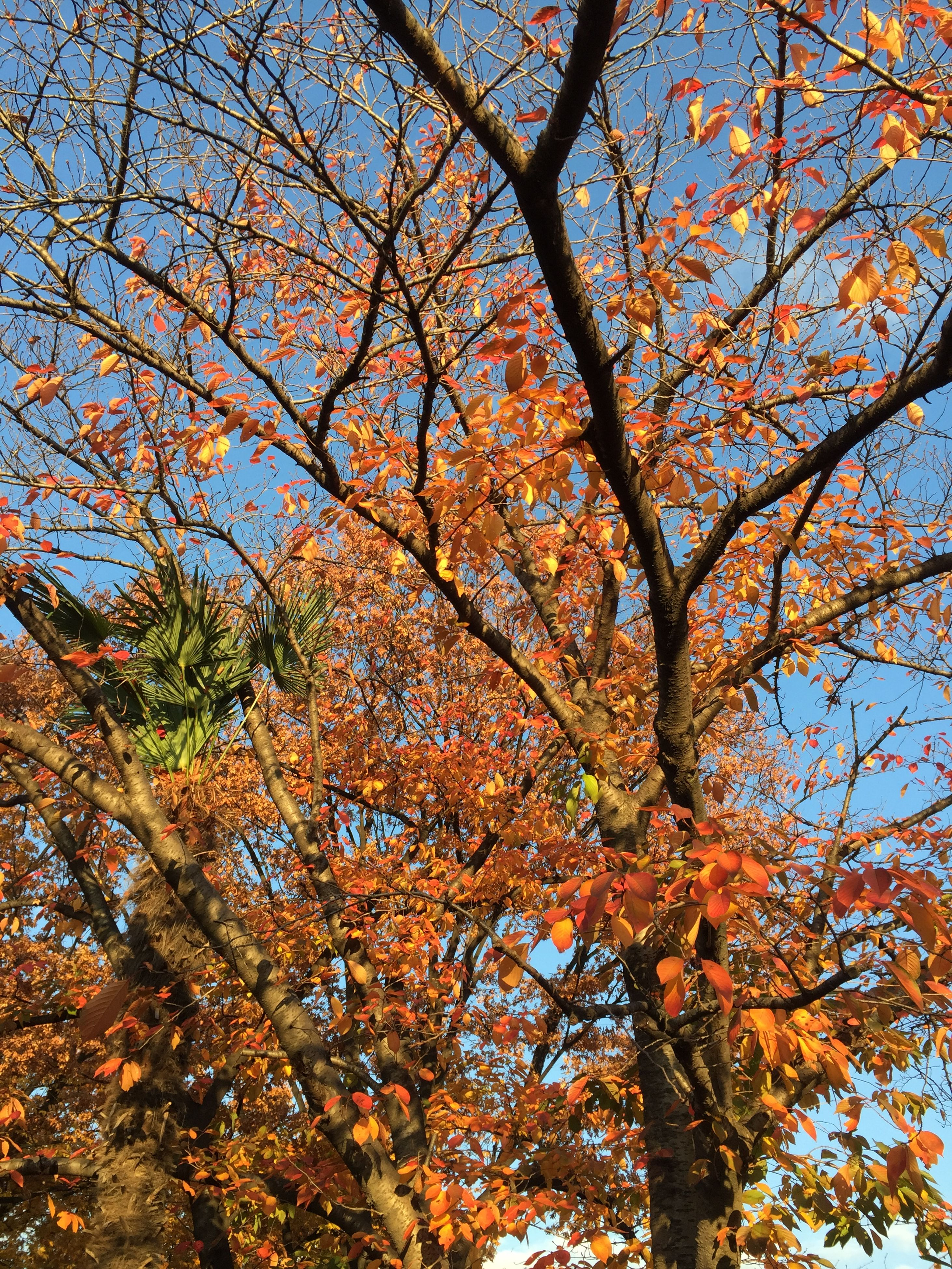 tree, low angle view, branch, growth, autumn, beauty in nature, nature, change, season, sky, flower, tranquility, day, clear sky, freshness, outdoors, no people, leaf, blossom, yellow