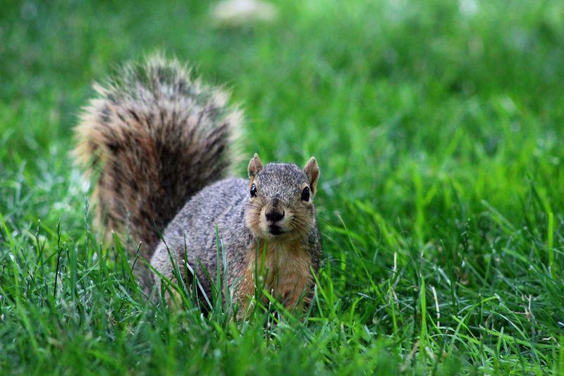 Squirrel Animals Nature Photography Summer Summer Views