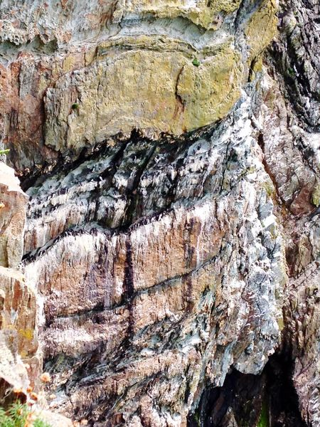 Nature On Your Doorstep Cliffs Puffins Nesting Wales Holyhead Mountain