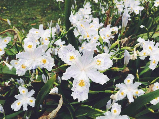 美丽的花。 Hello World