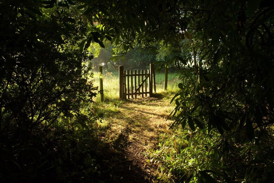 'Hobbit' passage Nature Tree Trees And Nature Trees And Sky Treescollection Trees And Bushes Tree Silhouette Silouette & Sky Silhouette Silouette Silouette And Shadows Silouhette&sky Passage Passageway Bush Bushes Bushes And Trees Bushes And Flowers Grass Green Color Outdoors Tranquility Beauty In Nature Tranquil Scene Tranquility