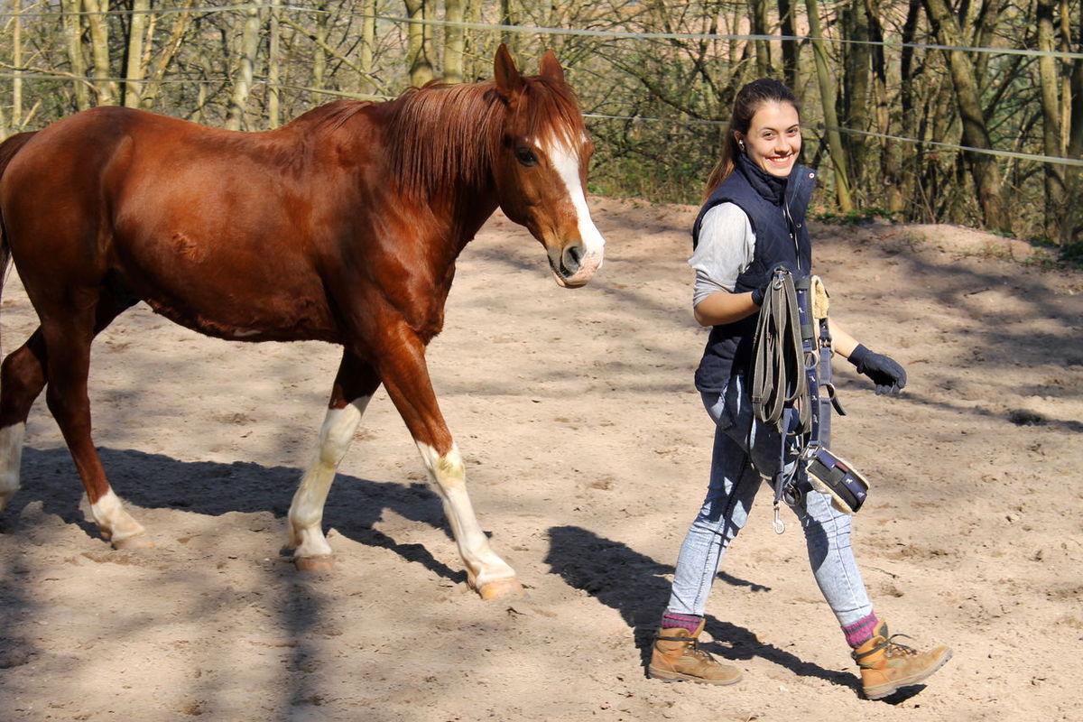 My Love❤ Horse Photooftheday Bestes Pferd gewinnt man das Vertrauen eines Tieres, hat man einen Freund fürs leben♥