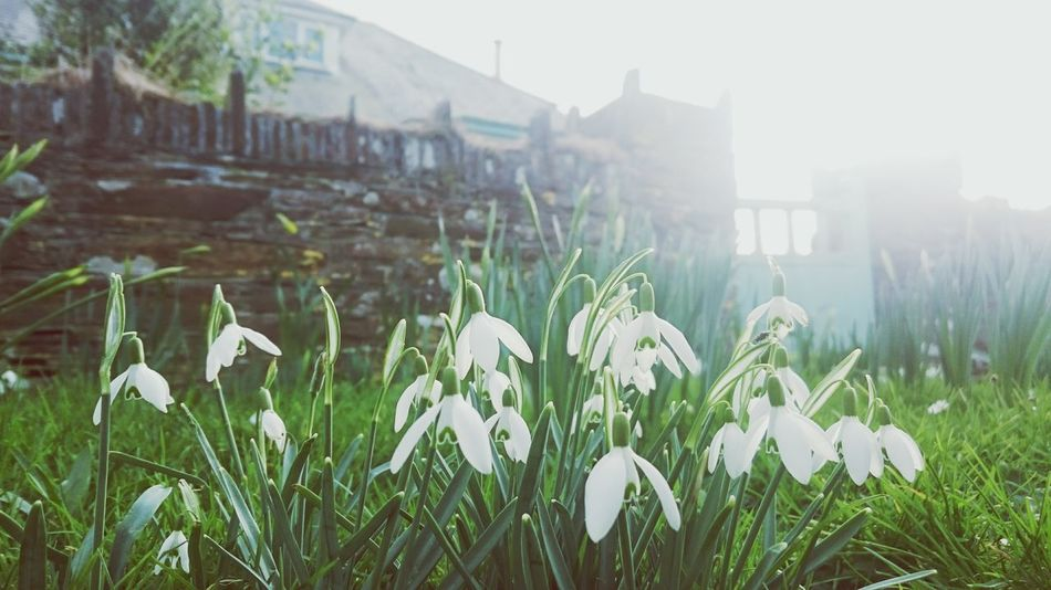Growth Back Lit Sunbeam Plant Nature Flower No People Field Rural Scene Grass Built Structure Beauty In Nature Outdoors Spring Agriculture Architecture Freshness Cornwall Nature Growth Flower Head Fragility Beauty In Nature Cornish Village Cornish Coast