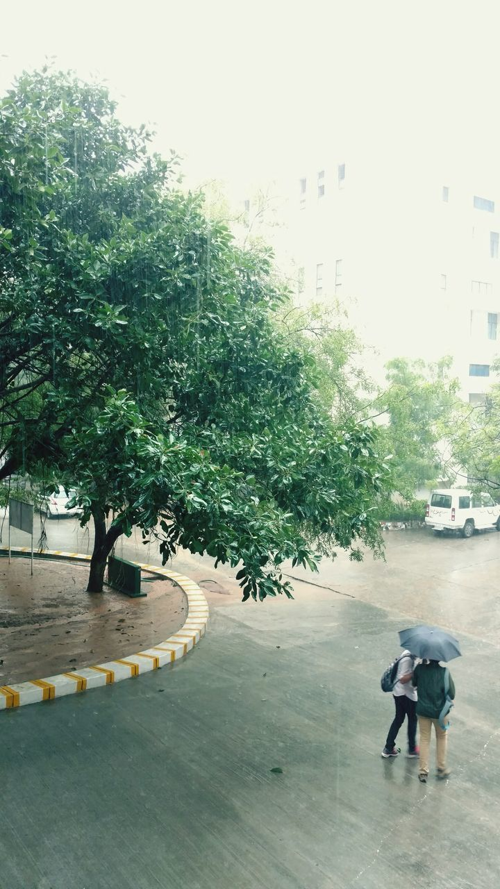 tree, full length, high angle view, real people, childhood, two people, outdoors, day, city, architecture, people