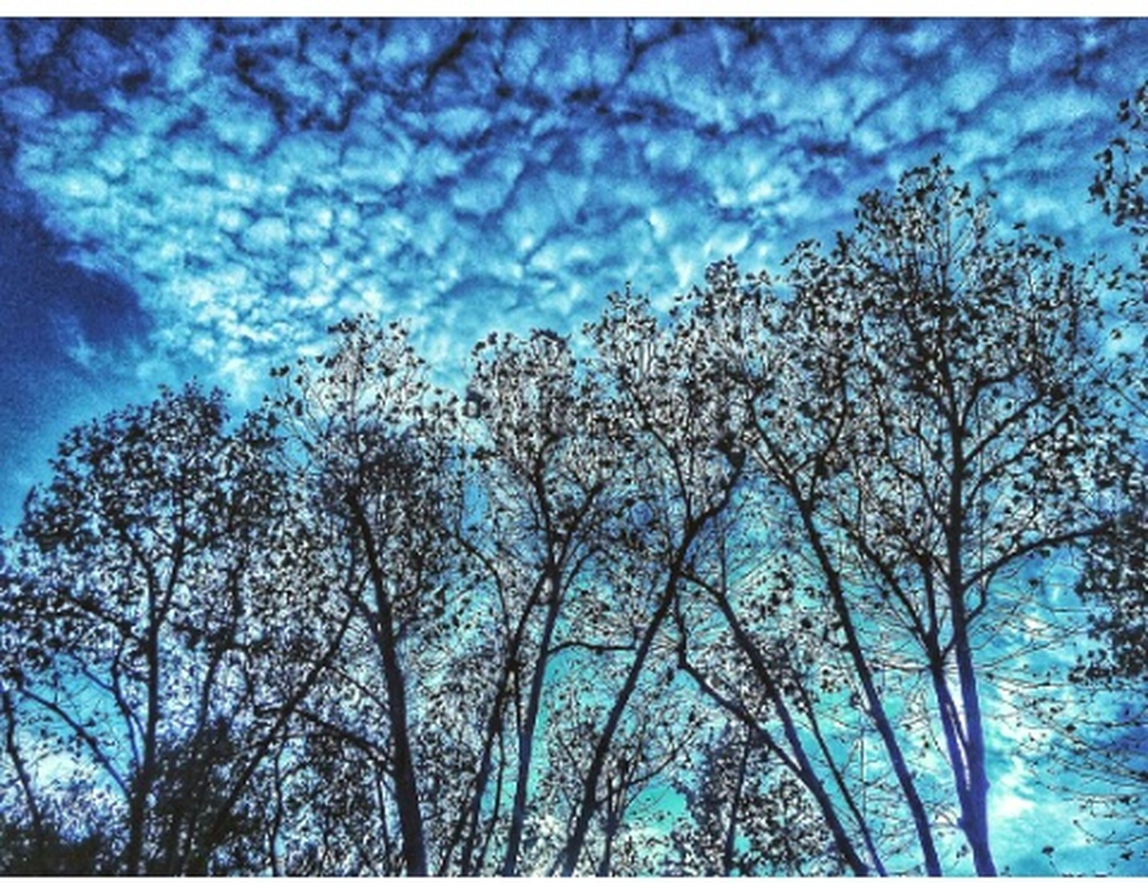 low angle view, tree, sky, blue, auto post production filter, branch, tranquility, scenics, nature, tranquil scene, beauty in nature, growth, cloud, cloud - sky, non-urban scene, solitude, day, tree trunk, outdoors, tall - high, green, majestic, cloudscape, remote, tall, cloudy, treetop, no people