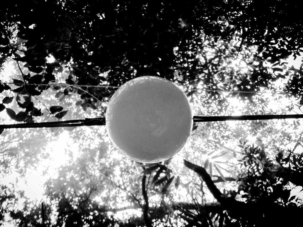 Looking Up Lightbulb Lightbulb Moment Hanging Light Bulb Out In Nature Outdoors Black & White Black And White Black And White Photography Circular Circle Round Tree Geometric Shape Abstract Abstract Photography Lines And Shapes Lines And Curves Circle Of Light Circular Light