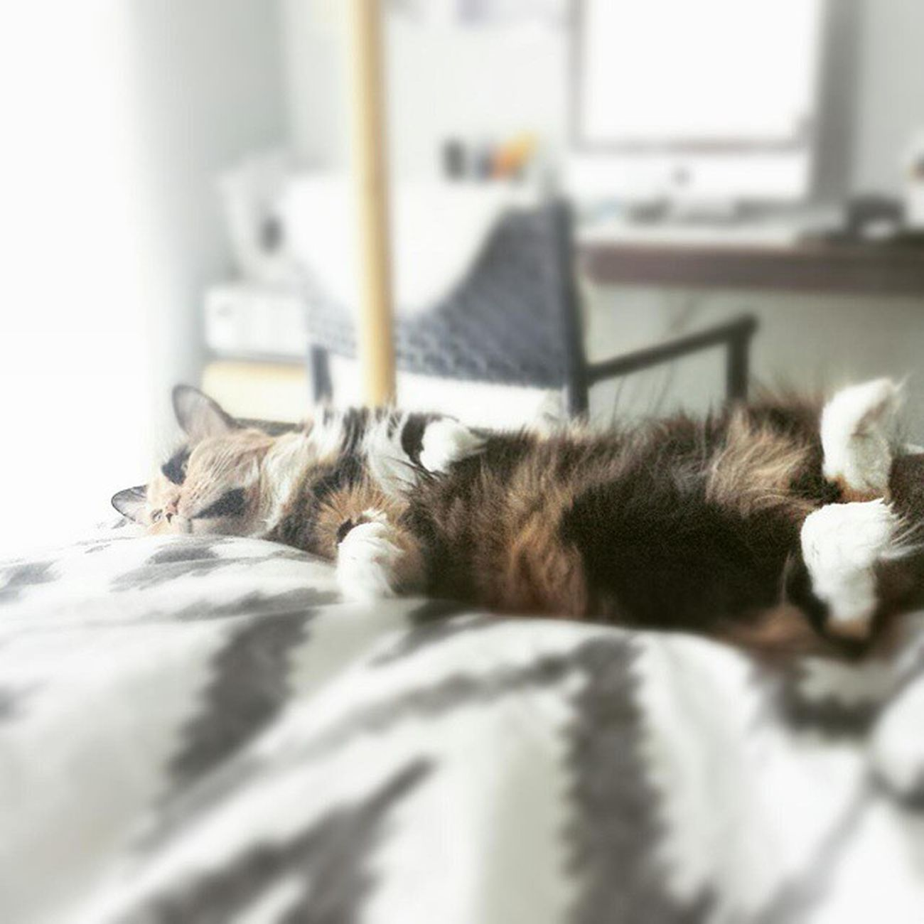 """""""Be yourself: Everyone else is already taken."""" ~ Oscarwilde Quotes Authenticity Happy CATurday♡ Saturday Weekend Technokitty Calico Catsofinstagram Lazy Cat GoodthingImcute Pose Kitty Meow"""