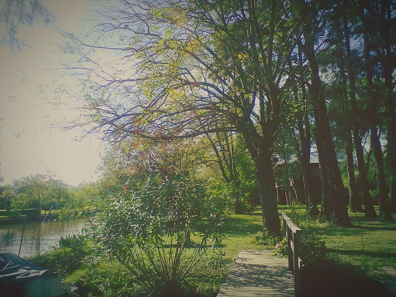 Relaxing Island Old Photos With History Old Phone Photo Riverisland Green Green Green!  Plants And Flowers