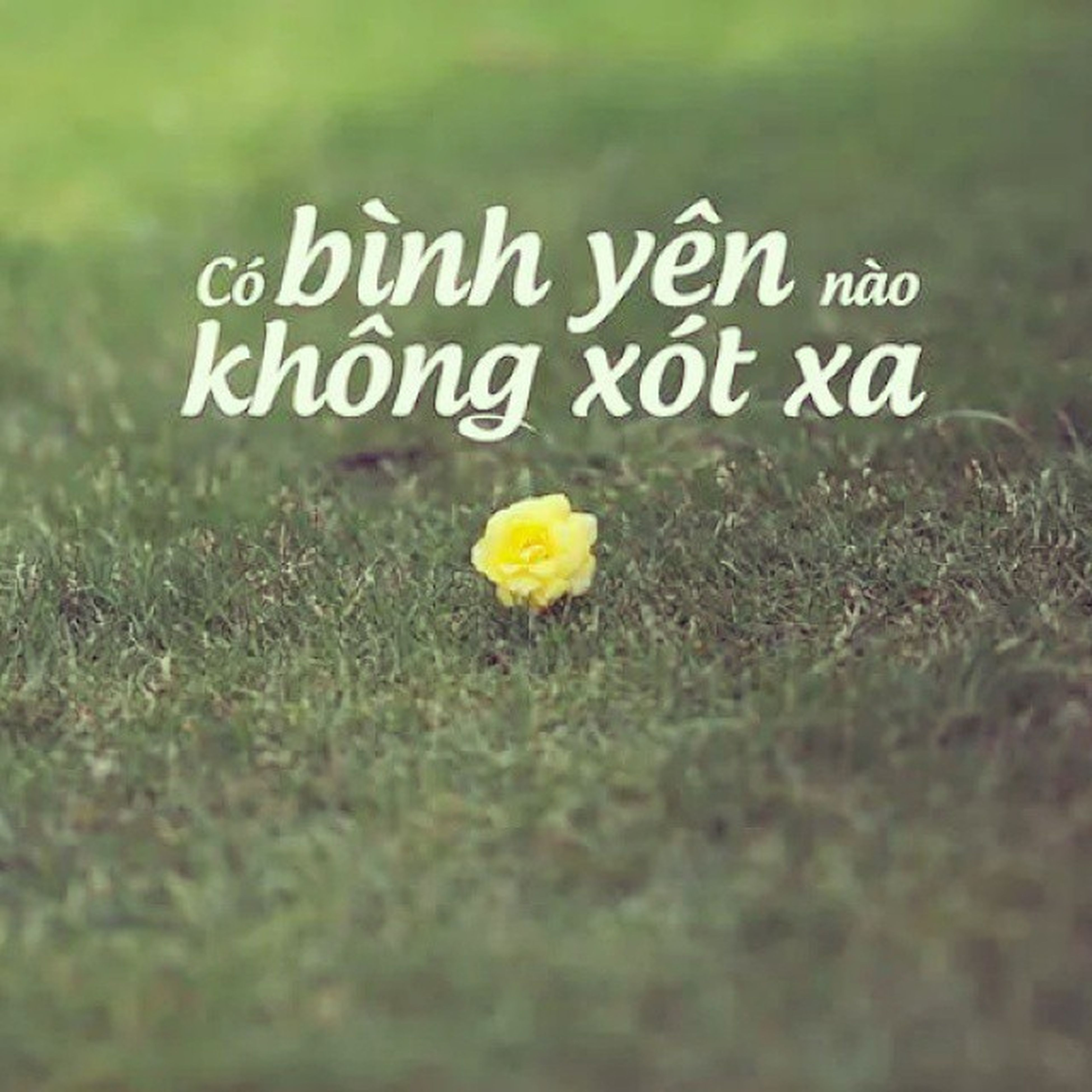 yellow, selective focus, field, grass, text, green color, focus on foreground, close-up, growth, nature, western script, flower, day, plant, outdoors, fragility, no people, beauty in nature, freshness, green