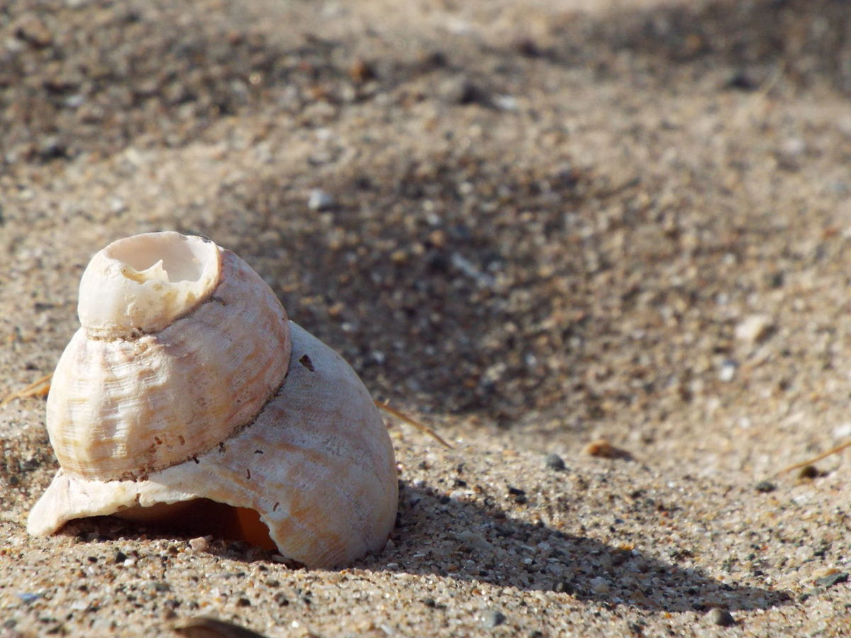 Fleetwood Beach Sand Shell