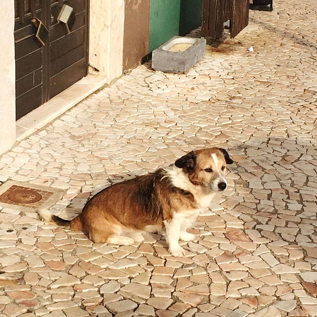 Alentejo - Borba Portugal Dog Borba Colors Street Dog Alentejo