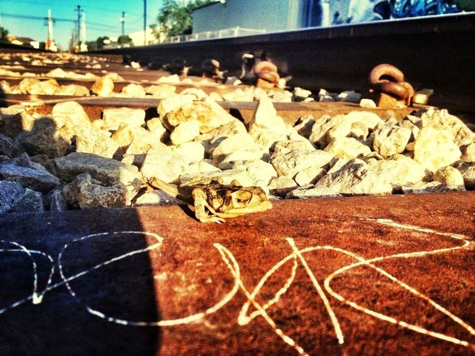 Dead frog two ways Photo by A.T.