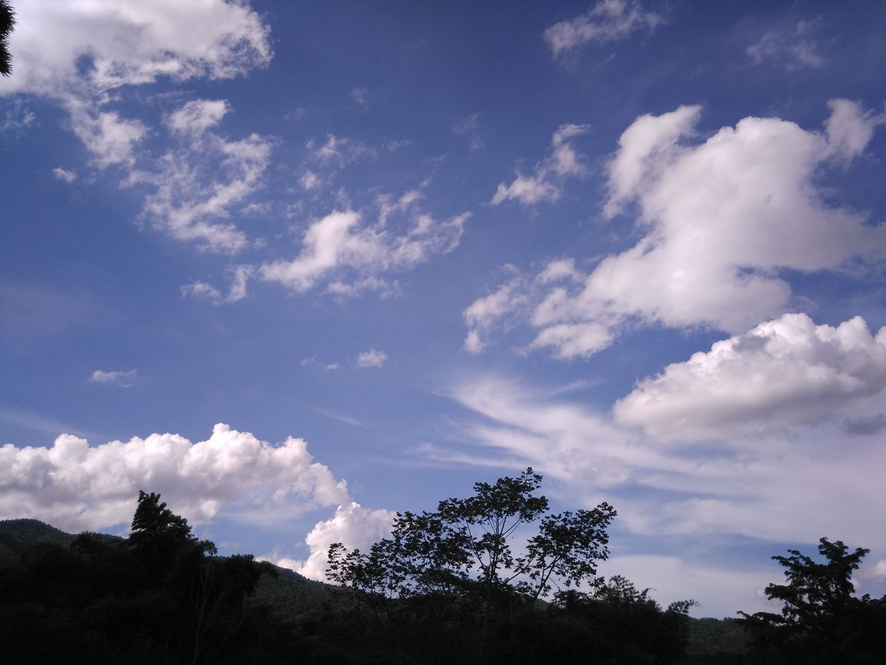 sky, nature, low angle view, beauty in nature, cloud - sky, tree, tranquility, scenics, no people, outdoors, day