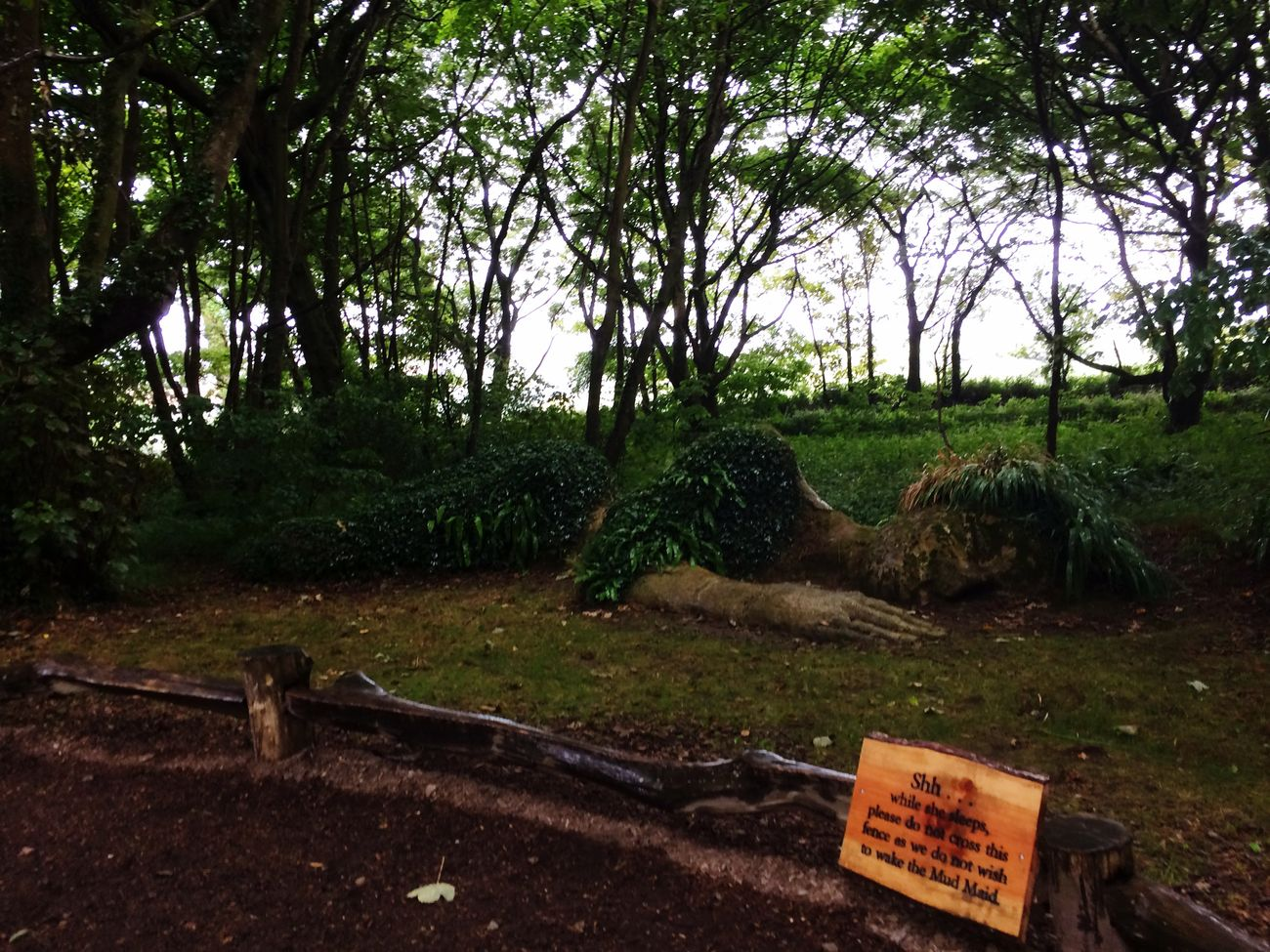 Lostgardensofheligan Gigant Sleeping Tranquility Tree Communication Forest WoodLand Non-urban Scene Text Scenics Growth Outdoors Countryside Nature Day Solitude Plant Green Color Beauty In Nature Green No People Tranquil Scene Kernow Mad Maid