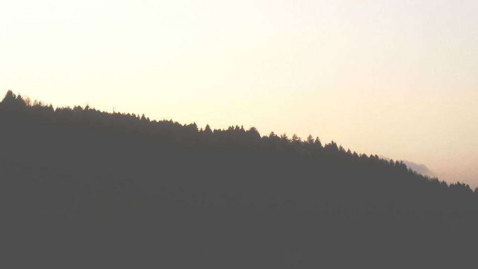 Sunset Forest Tree Pine Tree Pinaceae Landscape Silhouette Beauty In Nature No People Sky Outdoors State Of Mind  Nature Astronomy Tranquility Reflection EyeEmNewHere