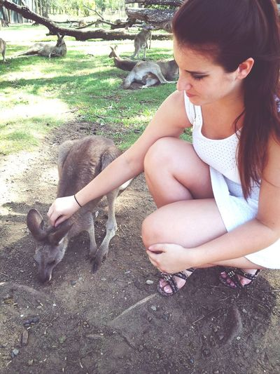 LonePineKoalaSanctuary Kangaroo Brisbane Animals :) ♡