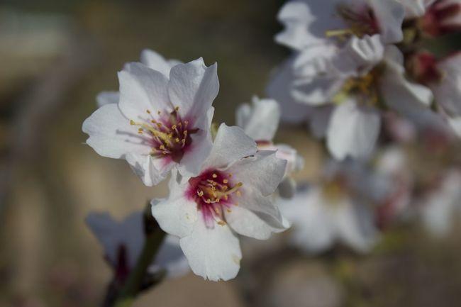 Spring flowers Spring Flowers Flowerporn