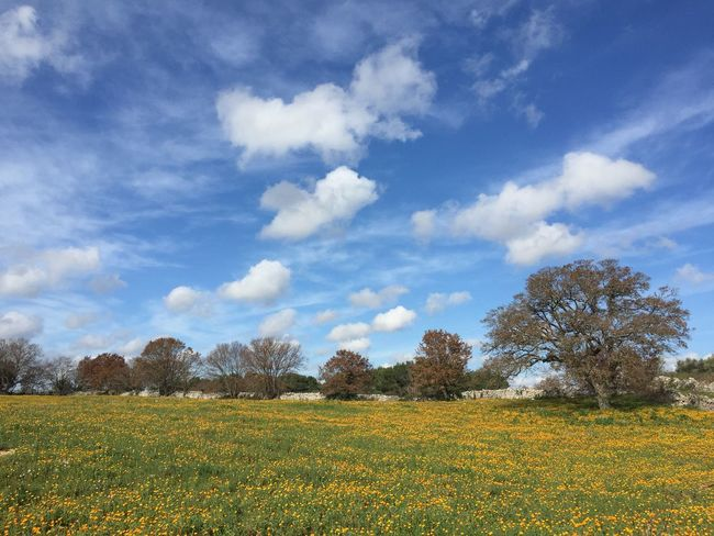 Countryside Tree Trees Trees And Sky Flowers Flower Green Sky Sky And Clouds Sky_ Collection Flowers,Plants & Garden Flowers, Nature And Beauty Wind Vento Campagna Cielo Fiori Puglia Martinafranca Cisternino Acquedotto Parco Park Park Italy