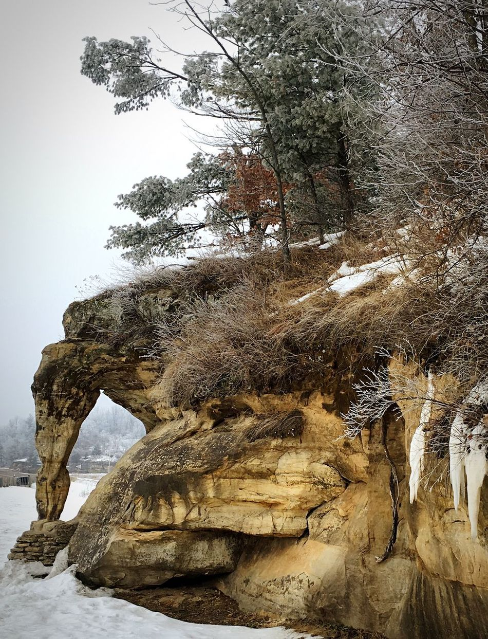 Elephant Elephant Trunk Elephant ♥ Elephants Showcase: February Rock Formation Rock - Object Trees Snow Frozen Nature