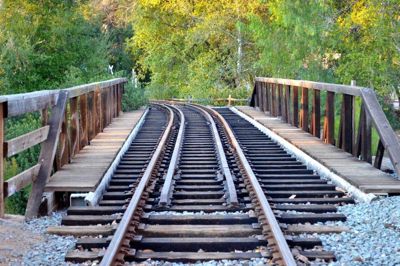 tree, outdoors, day, wood - material, no people, rail transportation, railroad track, nature, close-up