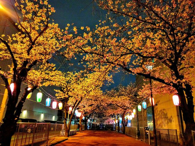 Tree_collection  Cherry Blossoms Eyem Natura Lover Night View Night Photography Light And Shadow Eyem Flower_collection Night Jog