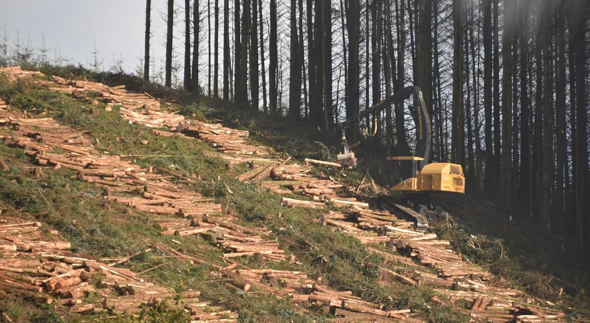 Taking Photos Sunnyday Landscape Motorway View Forestry Harvester Nikon D5500