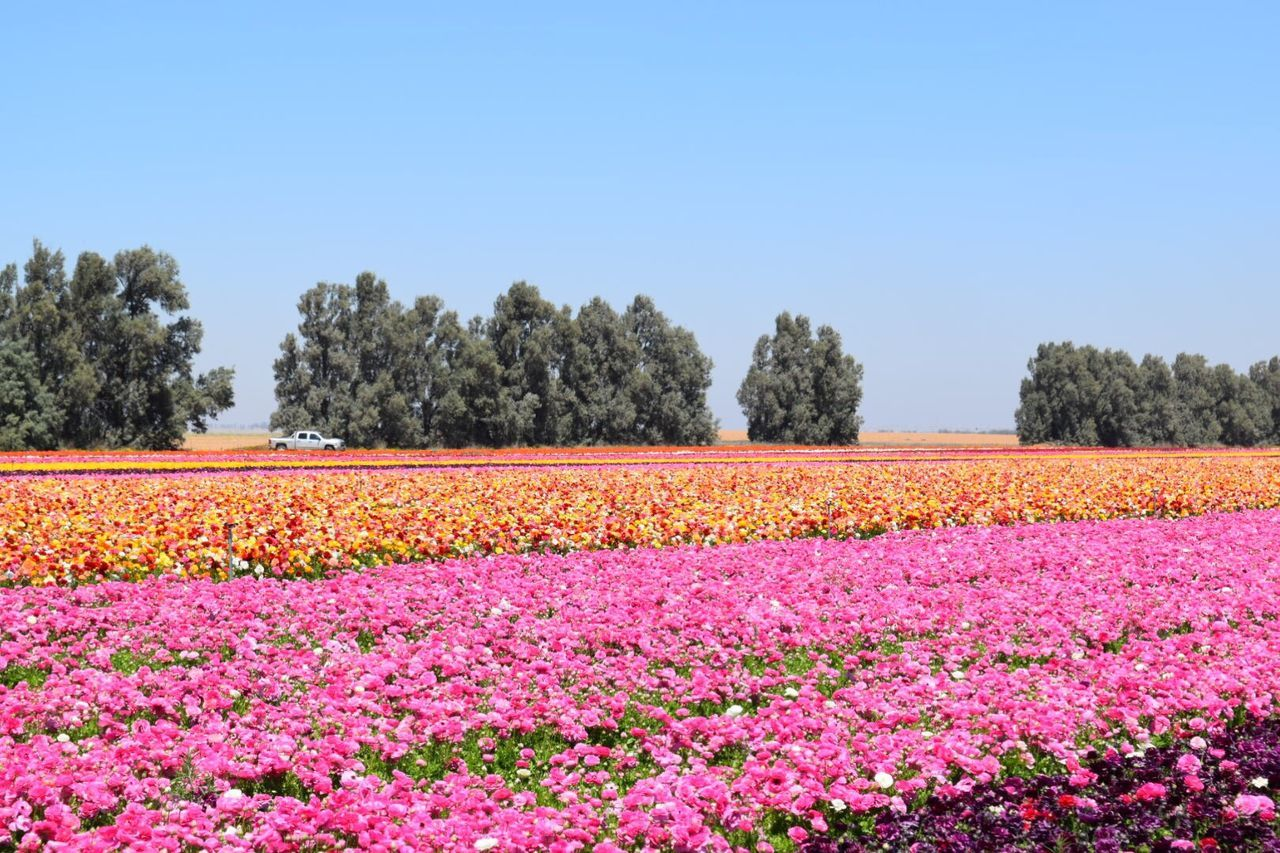 Flower Tree Multi Colored Nature Plant Pink Color Rural Scene Variation Beauty In Nature Field Flowerbed Agriculture Colorful Summer Tranquility Scenics No People Springtime Tranquil Scene Landscape Vertical Spring Agriculture Pink Pink Flower