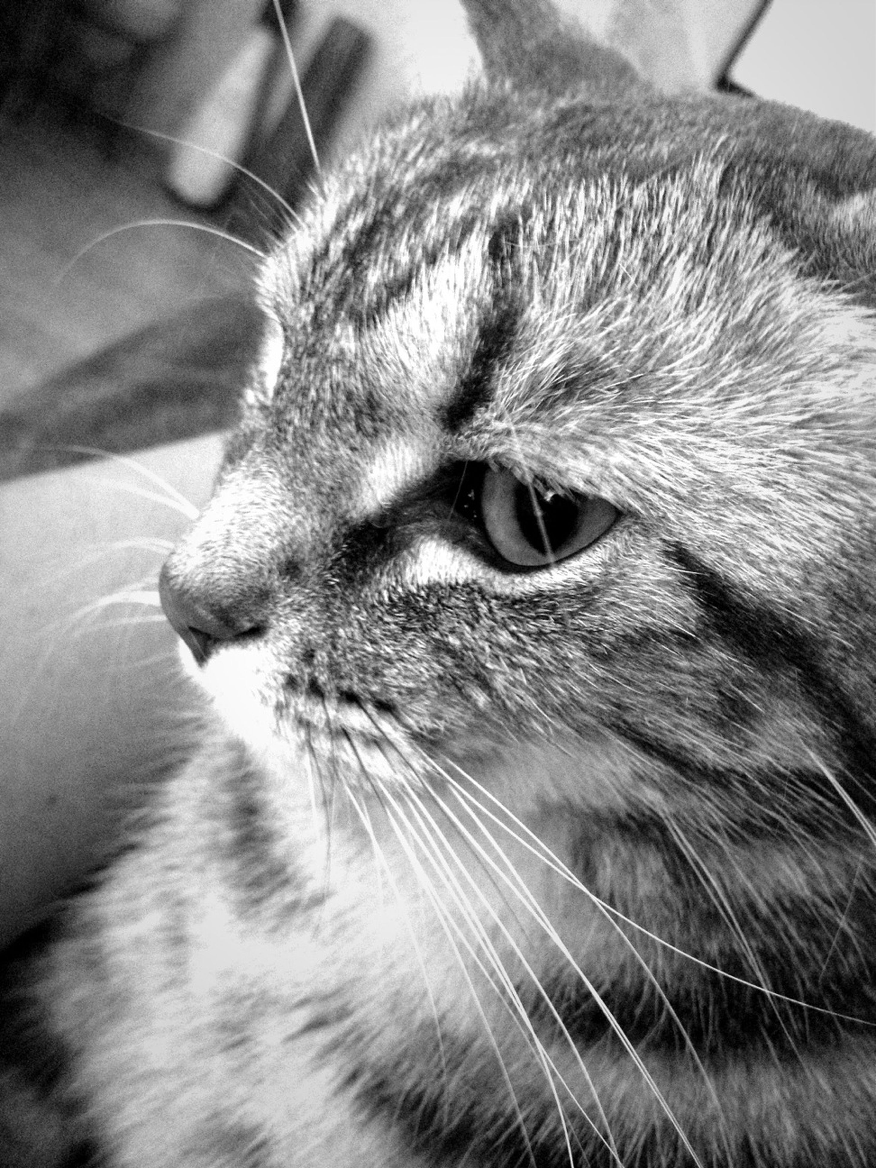 pets, one animal, domestic animals, domestic cat, animal themes, mammal, cat, whisker, feline, close-up, animal head, indoors, animal body part, part of, relaxation, looking away, focus on foreground, animal eye, snout, zoology