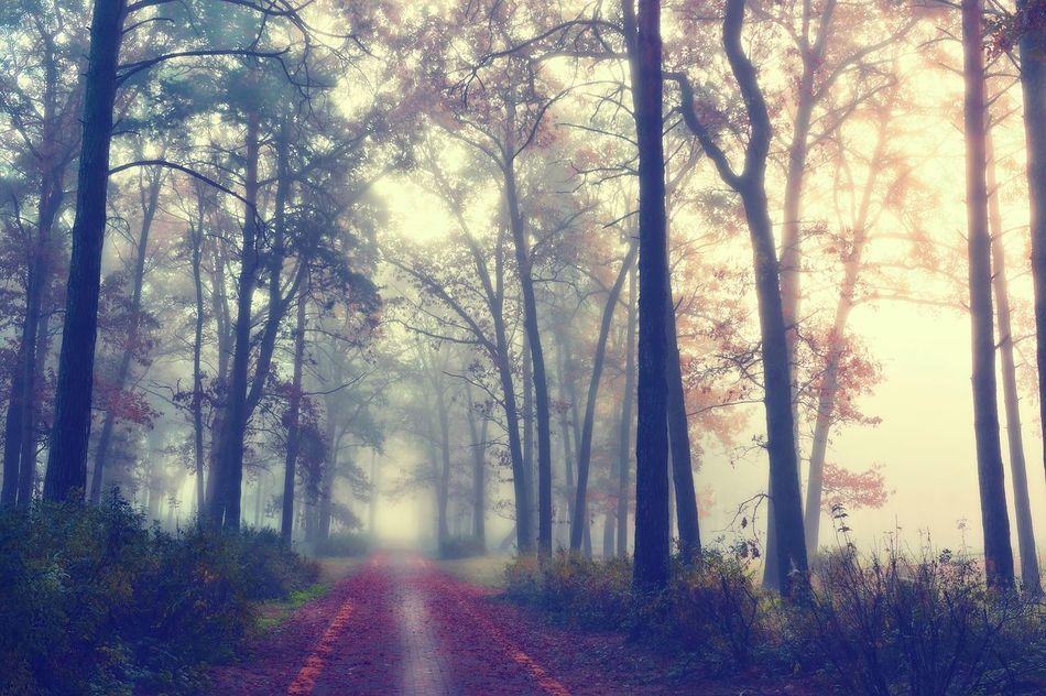 Tranquility Nature Landscape Filtres Et Couleurs